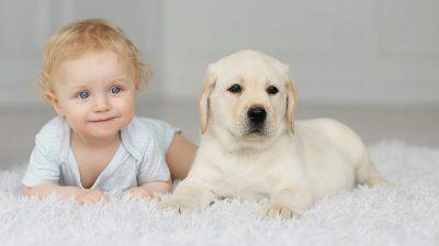 10 consejos para educar a tu perro cuando tienes bebés