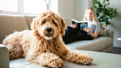 10 trucos para quitar pelos de mascota de ropa y muebles