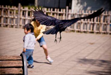 12 aves peligrosas para el ser humano