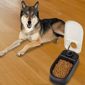 Comedero para perros automático programable