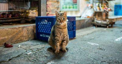 Cómo ahuyentar gatos callejeros sin causarles daño