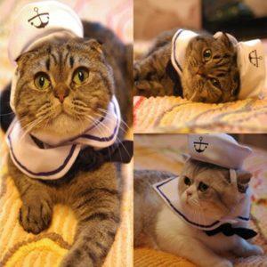 Disfraces con sombrero para gatos