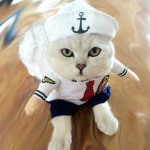Disfraces de marineros para gatos