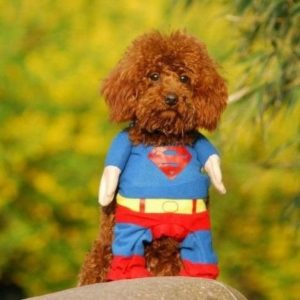 Disfraz de Superman para gatos