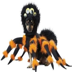 Disfraz para perro de araña