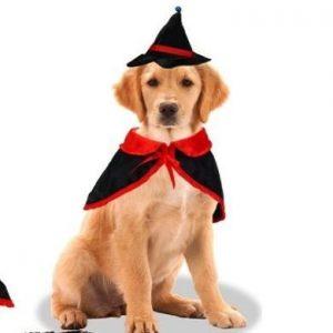 Disfraz para perro de bruja
