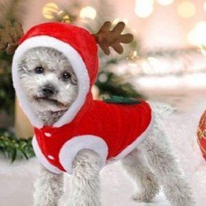 Disfraz para perro de reno