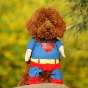 Disfraz para perro Superman