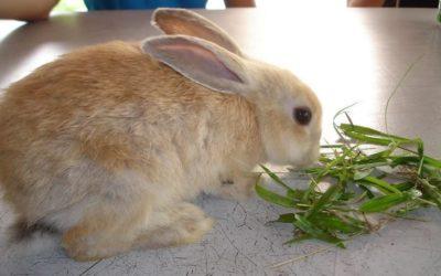 Piensos para conejos