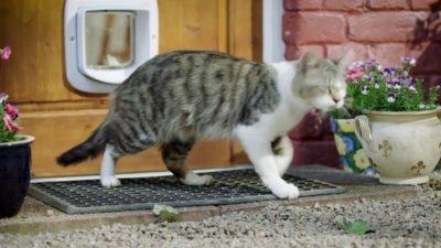 Puertas para gatos