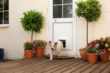 Las 7 mejores puertas para perros