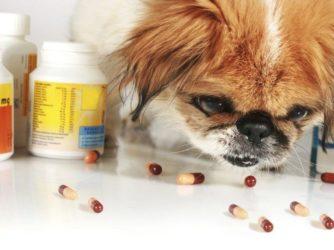 Vitaminas para perros