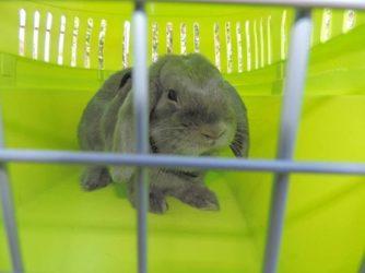 Transportines para conejos