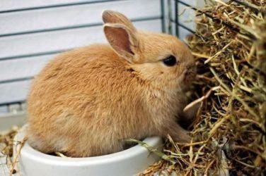 Henos para conejos
