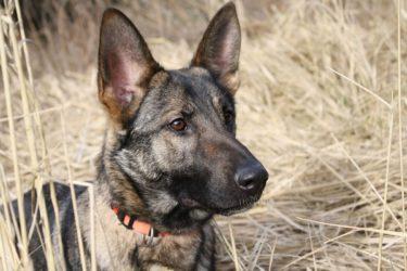 Collares eléctricos antiladridos para perros