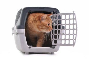Transportines para gatos