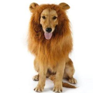 Peluca de león para disfrazar a tu perro