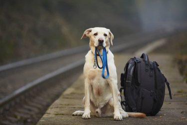 ¿Se pueden llevar perros en el tren?