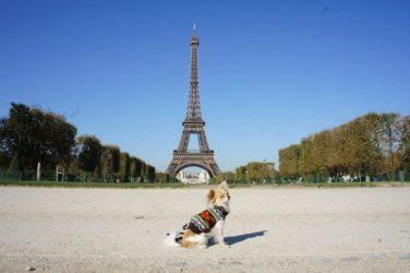 Viajar a París con perros